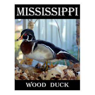 Wood Duck (Mississippi) Postcard