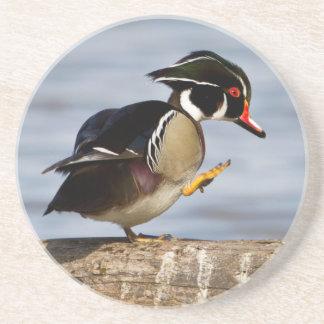 Wood Duck on log in wetland Beverage Coasters