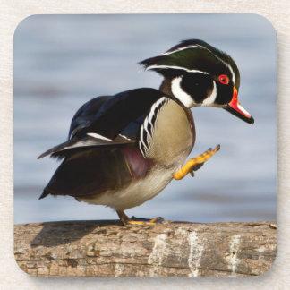 Wood Duck on log in wetland Coaster
