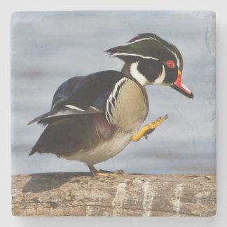 Wood Duck on log in wetland Stone Beverage Coaster