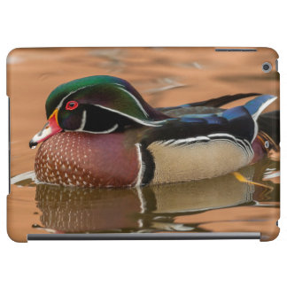 Wood duck swimming in water