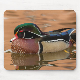 Wood duck swimming in water mouse pad