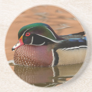 Wood duck swimming in water sandstone coaster