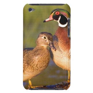 Wood Ducks and female on log in wetland iPod Case-Mate Case