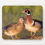 Wood Ducks and female on log in wetland Mousepads