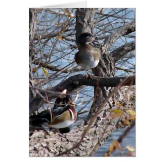 Wood Ducks in a Tree Card