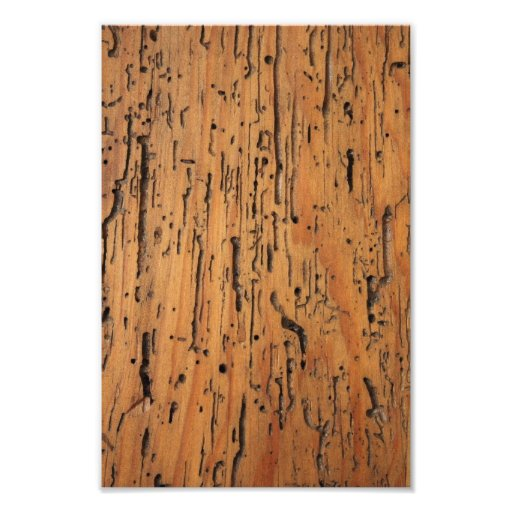 Wood Grain Photographic Print