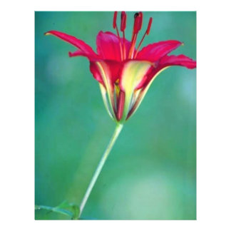 Wood lily flyers