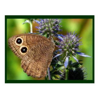 Wood Nymph Butterfly Postcard