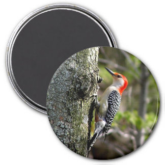wood pecker - red bellied magnet