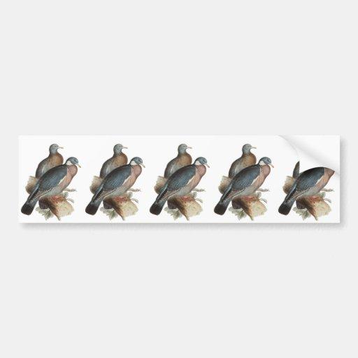 Wood Pigeon Bumper Stickers