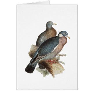 Wood Pigeon Card