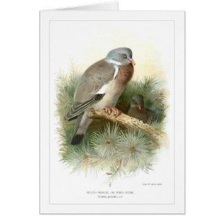Wood-Pigeon or Ring-Dove Card