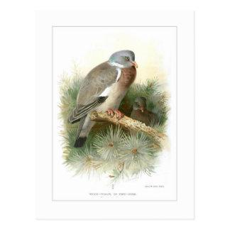 Wood-Pigeon Postcard