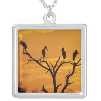 Wood Stork, Mycteria americana,adults at Square Pendant Necklace