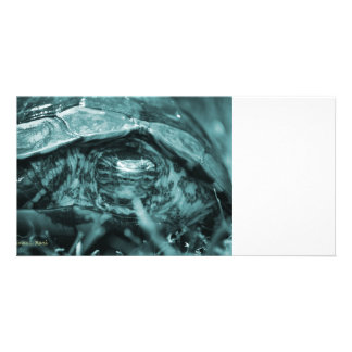 Wood turtle ornate head on in grass blue customized photo card
