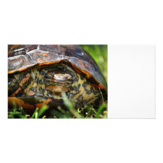 Wood turtle ornate head on in grass personalized photo card