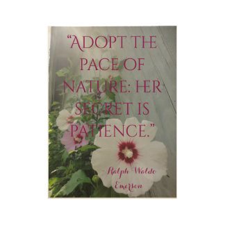 Wood Wall Quote Hibiscus flowers Sunbeams Poster
