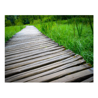 Wooden Boardwalk Hiking Trail Postcard