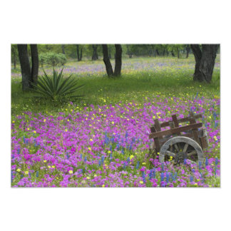 Wooden Cart in field of Phlox, Blue Bonnets Photographic Print