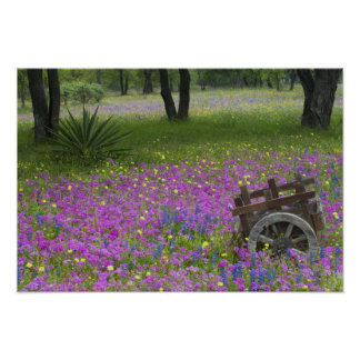 Wooden Cart in field of Phlox, Blue Bonnets Poster