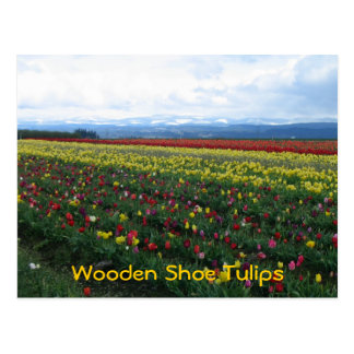 Wooden Shoe Tulips Postcard