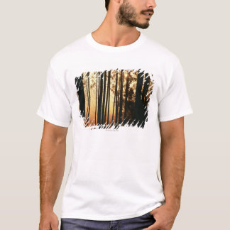 Woodland and sunrise T-Shirt