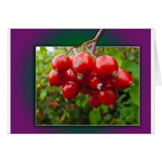 Woodland berries in the frame cards
