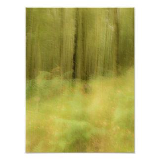 Woodland dreams photo print