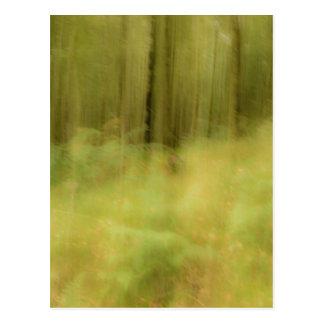 Woodland dreams postcard