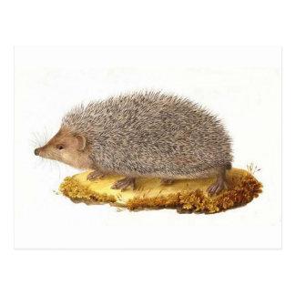 Woodland Hedgehog Post Card