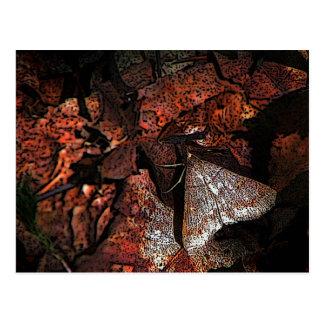 Woodland Moth Postcard