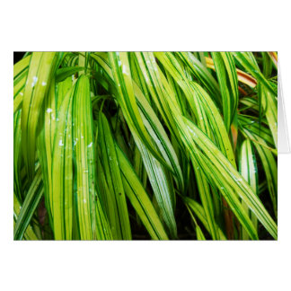 Woodland Note Card - Japanese Forest Grass