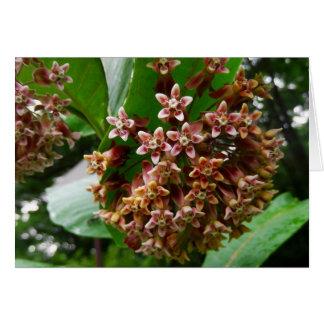 Woodland Note Card Wildflower Milkweed