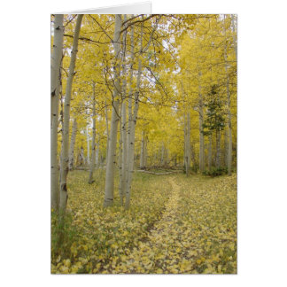 Woodland Path Christian All Occasion Greeting Card