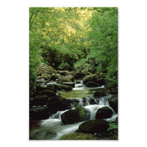 Woodland Stream Photographic Print.
