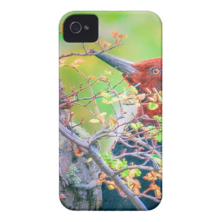Woodpecker at Forest Pecking iPhone 4 Cover
