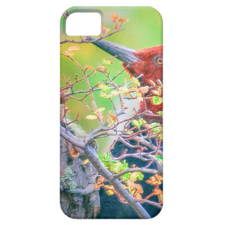 Woodpecker at Forest Pecking iPhone 5 Case