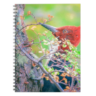 Woodpecker at Forest Pecking Notebooks