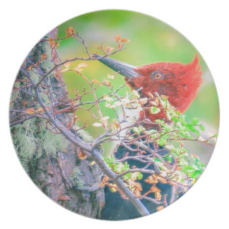 Woodpecker at Forest Pecking Plate