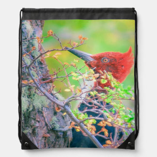 Woodpecker at Forest Pecking Tree Drawstring Bag
