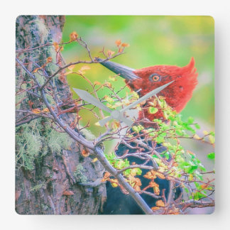 Woodpecker at Forest Pecking Tree Square Wall Clock
