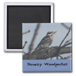 Woodpecker bird magnet