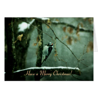 Woodpecker in Snow Christmas Card