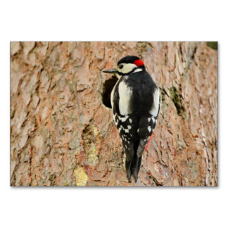 woodpecker on his tree card