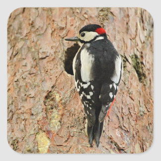 woodpecker on his tree square sticker