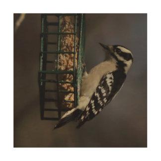 Woodpecker, Wood Photo Print. Wood Print