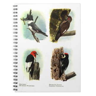 Woodpeckers Notebook (80 Pages)