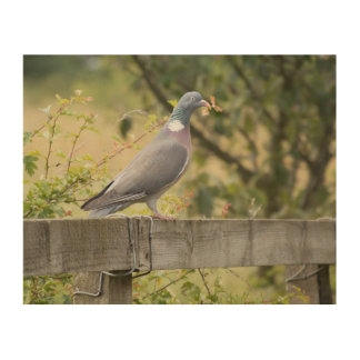 Woodpigeon Wood Print