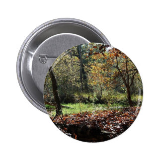 woods in autumn pin